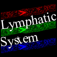 The role of lymphatic fluid flow in development, immunity, cancer metastasis and lymphedema